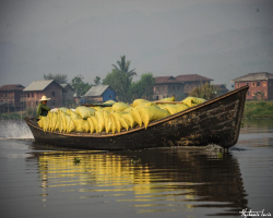 Birmanie101