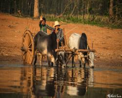 Birmanie108