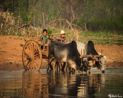Birmanie115