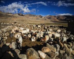 Ladakh Inde136