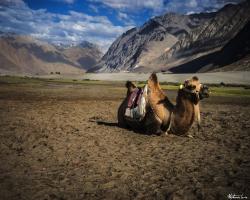 Ladakh Inde54