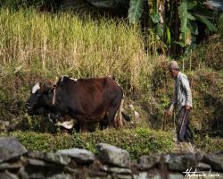 Nepal 2014 024