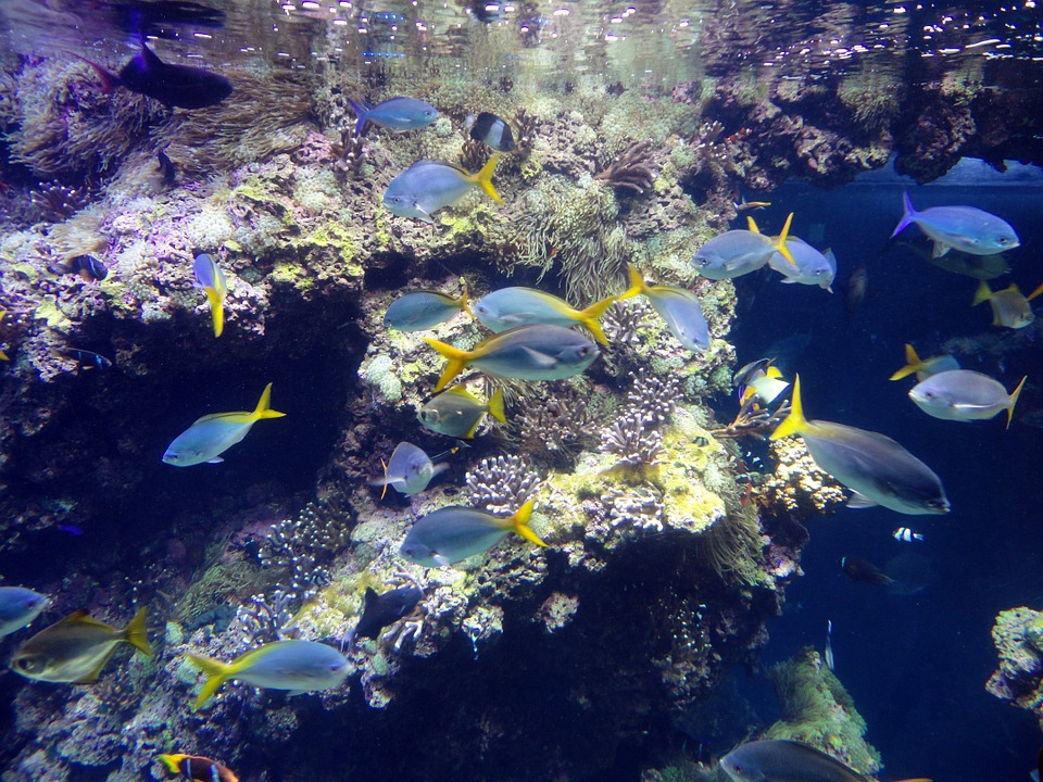 Musée Oceanographique Monaco